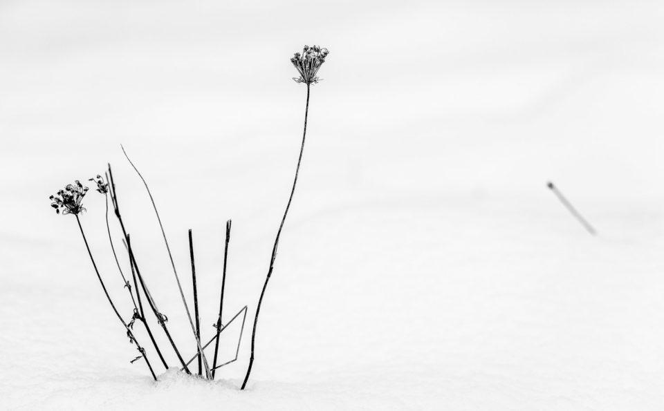Photographie minimaliste, une série de paysages d'hiver tout noir et blanc