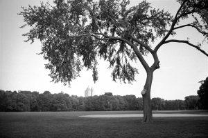 Photo noir et blanc d'un arbre à Central Park New York City