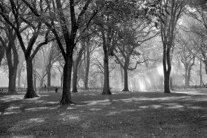 Photo noir et blanc de Central Park New York City